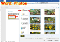 Word template: Add photos in a multi-column table